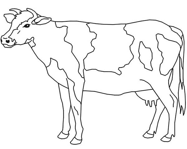 Coloring pages get download. Cow clip art realistic png freeuse library
