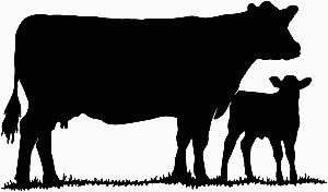 Cow clip art silhouette. Show heifer decal sticker
