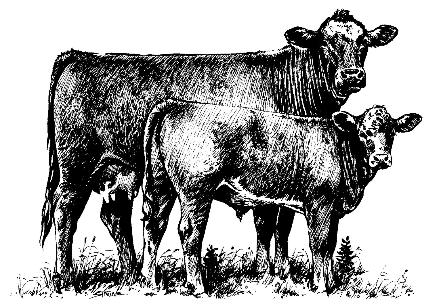 Clipart of a cattle. Cow clip art transparent background png black and white