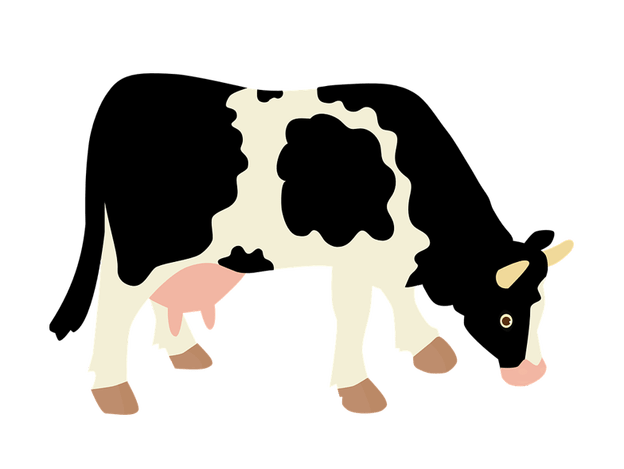 Cow clip art transparent background. Dairy farm image