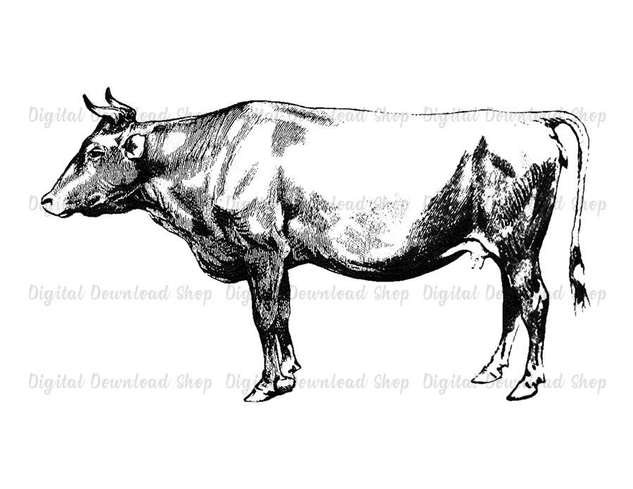 Cow clip art vintage. Printable wall iron on