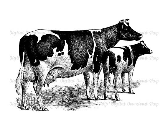 Cow clip art vintage. And calf printable transfer