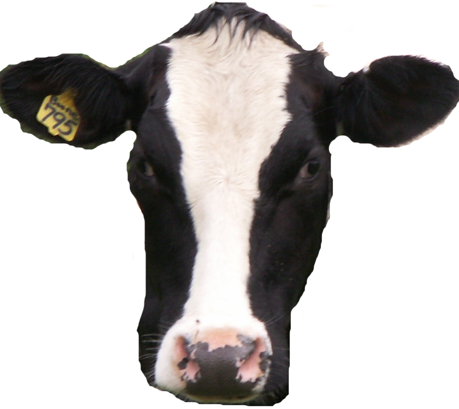 Cow head png. Black and white heads