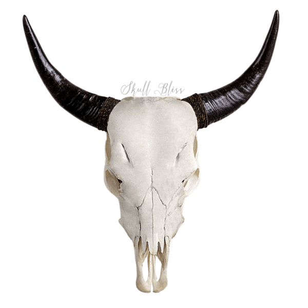 Cow horns png. Carved skull xl custom