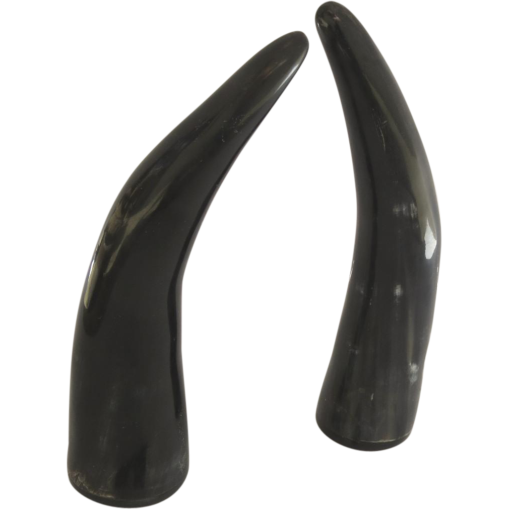 Cow horns png. Pair of vintage polished