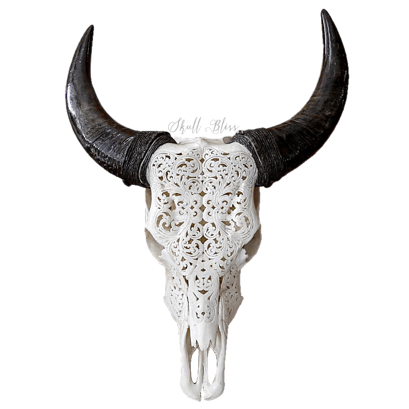 Cow horns png. Carved skull xl tribal