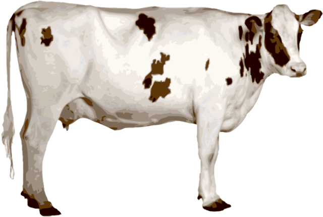 Cow png. All