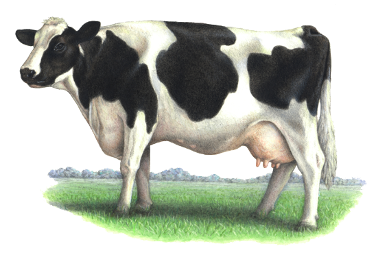 Cow png. Dairy transparent image arts