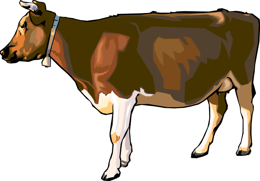 Cattle vector dairy cow. Farm livestock image illustration