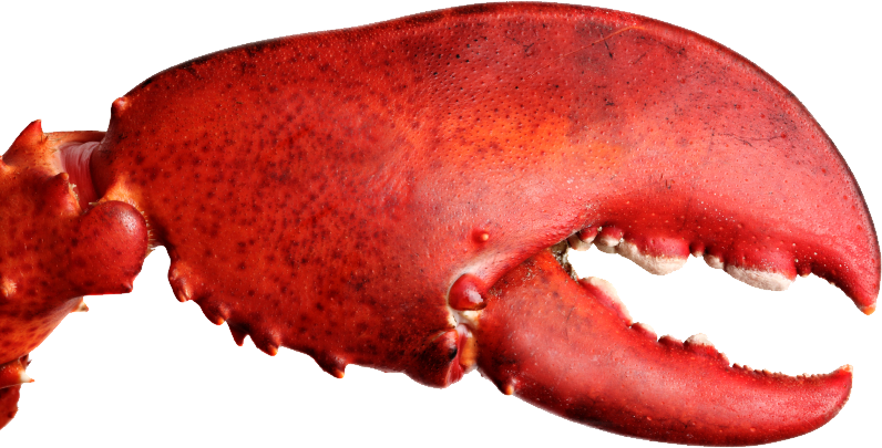 Download free lobster image. Crab claw png royalty free library
