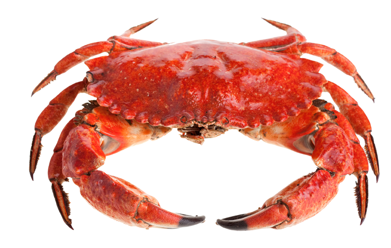 Crab claw png. Stone cakes recipe dunedin