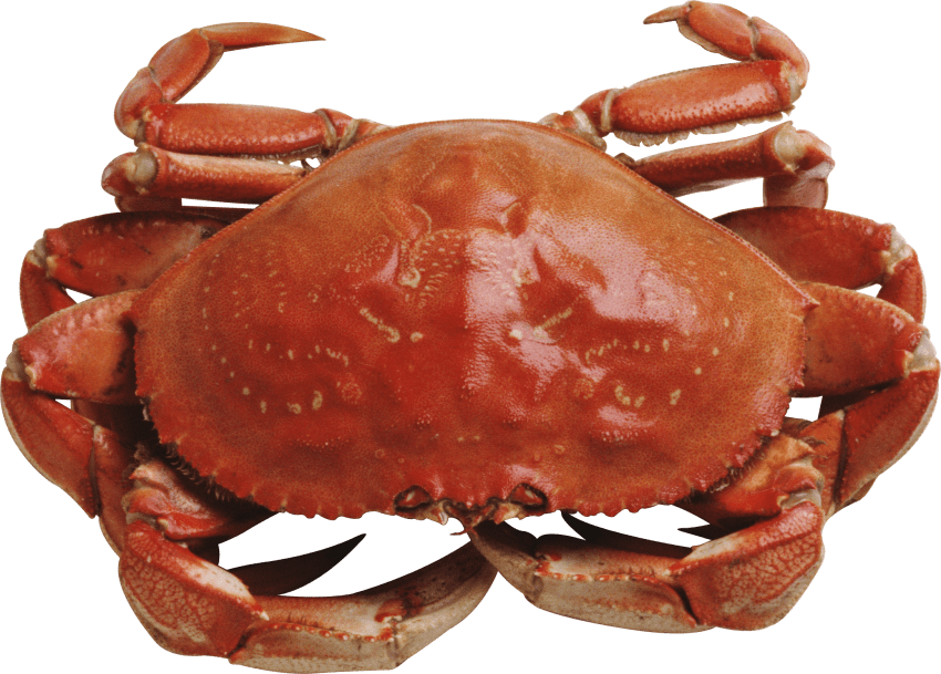Crab claws png. Red standing free images