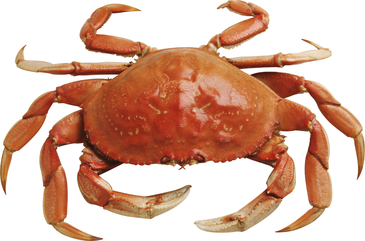 Crab clipart klutzy. Png picture of a