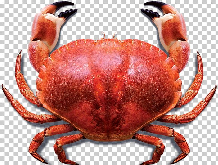 Crab muzzle. Meat the blue sea