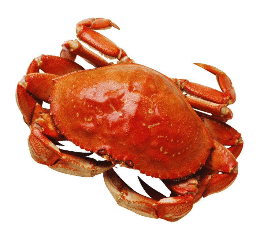 Free images toppng transparent. Crab png graphic black and white download