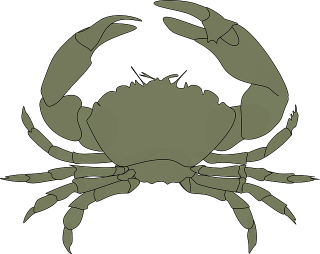 Crabs clipart crab claw. Free image on pixabay