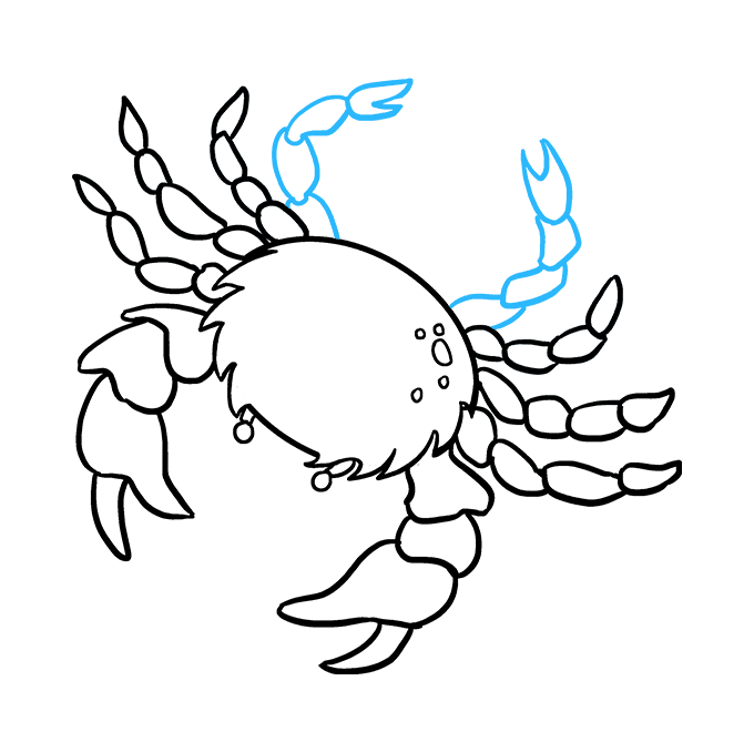 Crabs drawing. How to draw a
