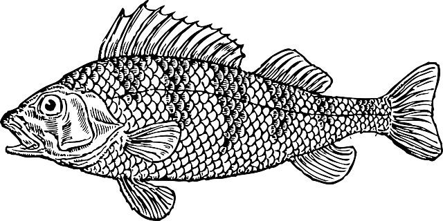 Crappie vector. Water cartoon bass fish