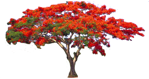 red tree png