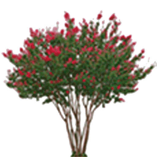 Crate myrtle png. Your choice of trees