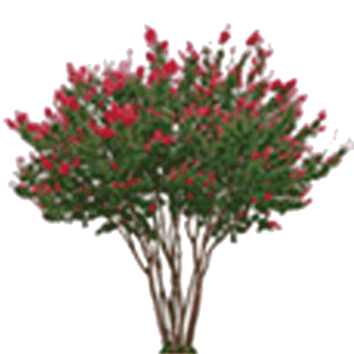 Crate myrtle png. Products archive page of