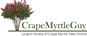 Crate myrtles yellow png. Crape myrtle guy back