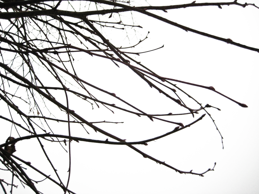 Creepy vines png. Branches ii by simfonic
