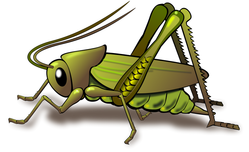 Grasshopper vector food chain. Cricket insect clipart