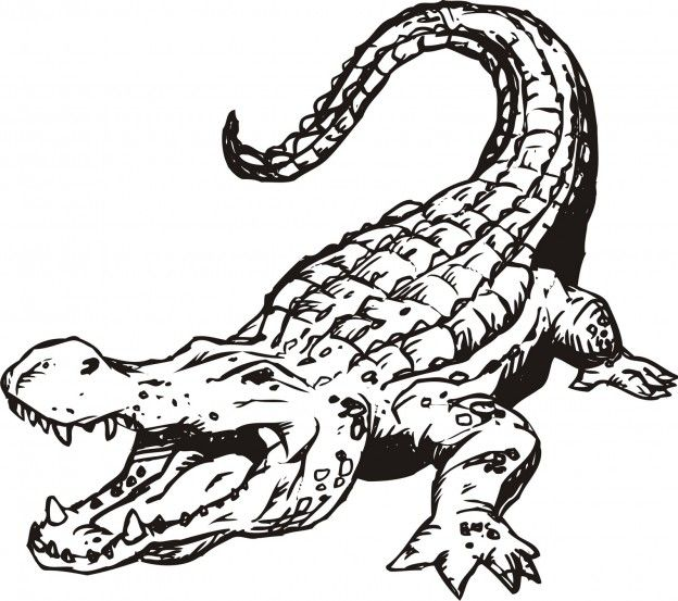 Crocodile Hunter Coloring Pages Crocodile Coloring Pages Baby ... | 553x624