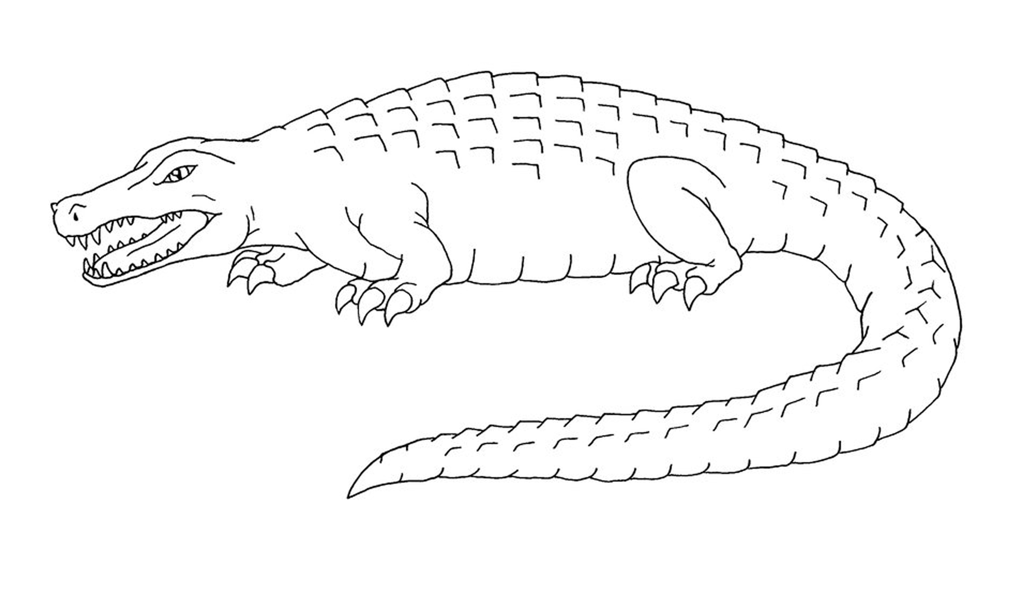 Crocodile clipart printable. Black and white affordable