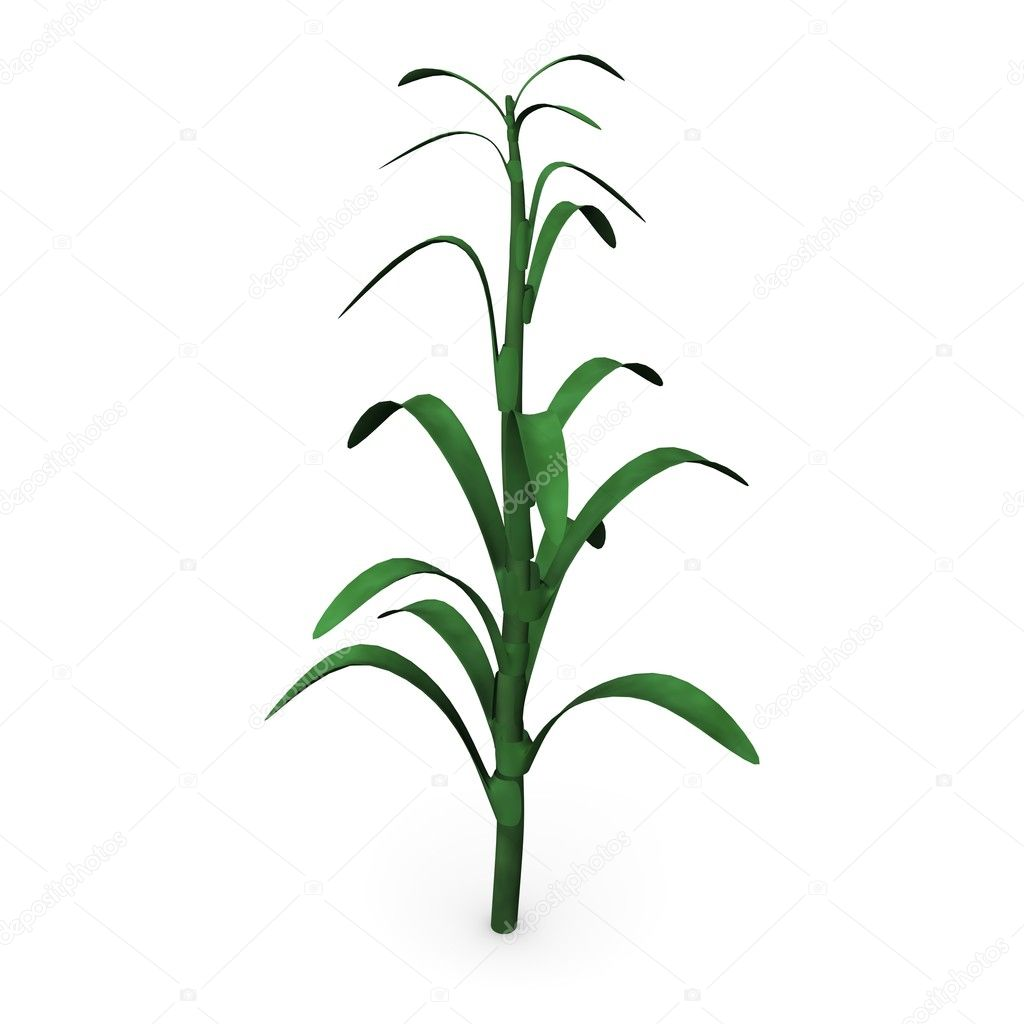 Crops clipart corn stalk. Stock photo drenderings d