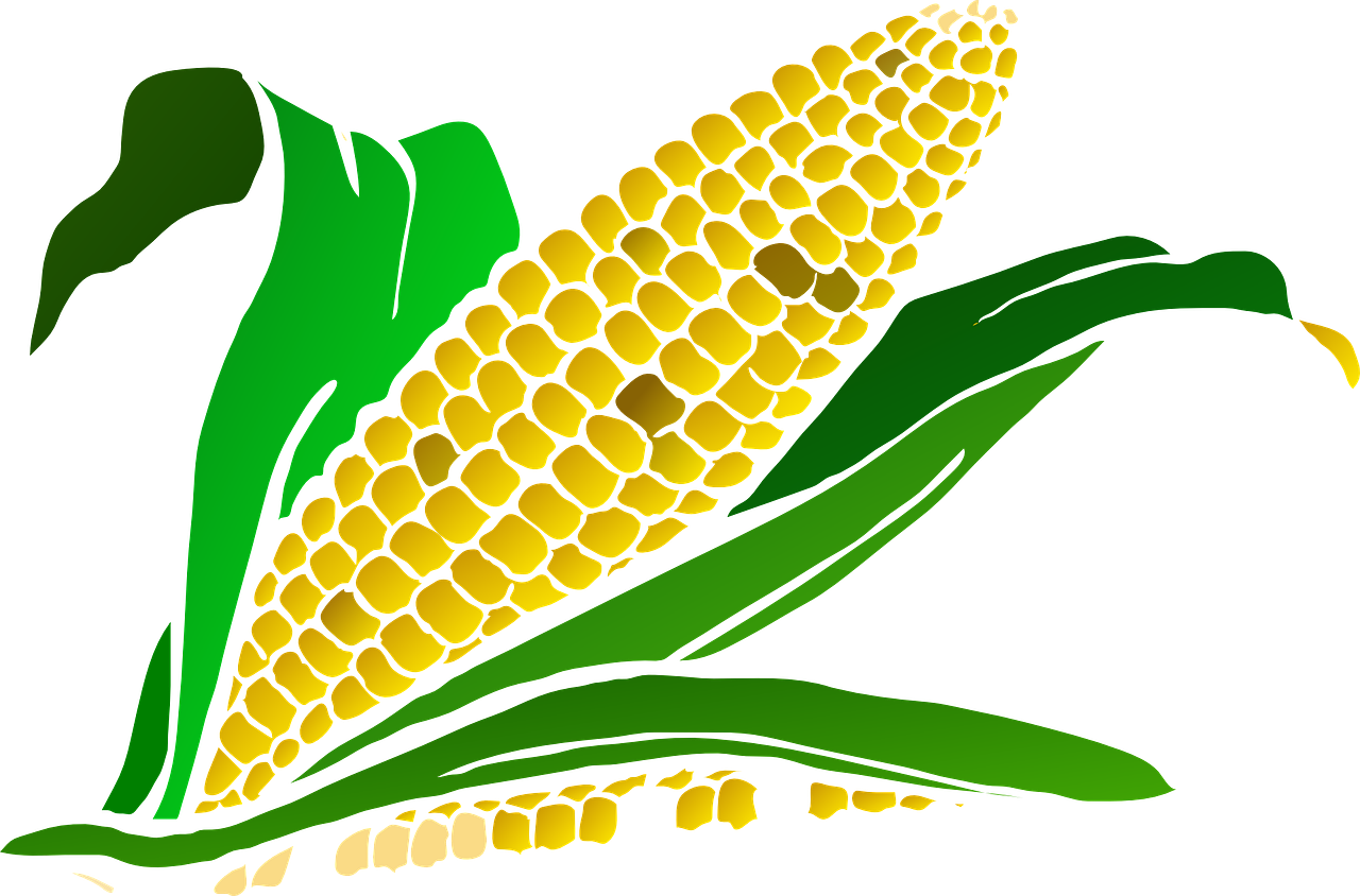 Crops clipart maize crop. Slow food opposes the