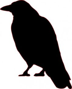 Crow clipart black australian. Pencil and in color