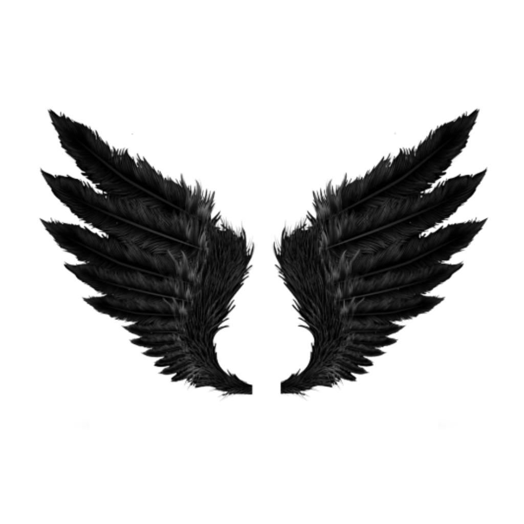 Crow feather png. Wings wing black fly
