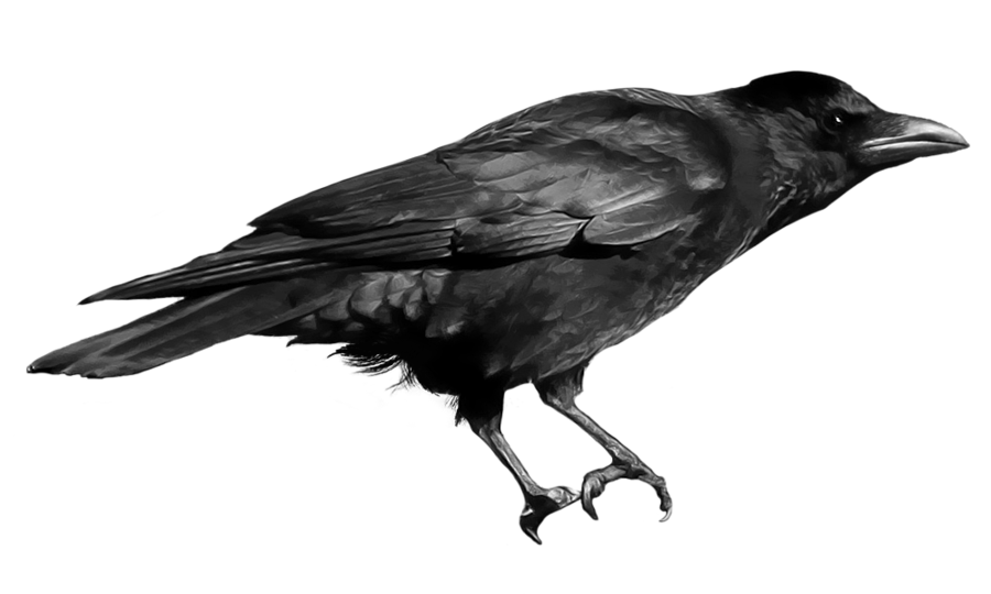 Raven png. Crow by peroni on