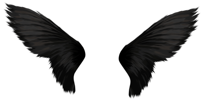 Crow wings png. Black free images toppng
