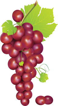 Crumpled grape. Download rapes vector red