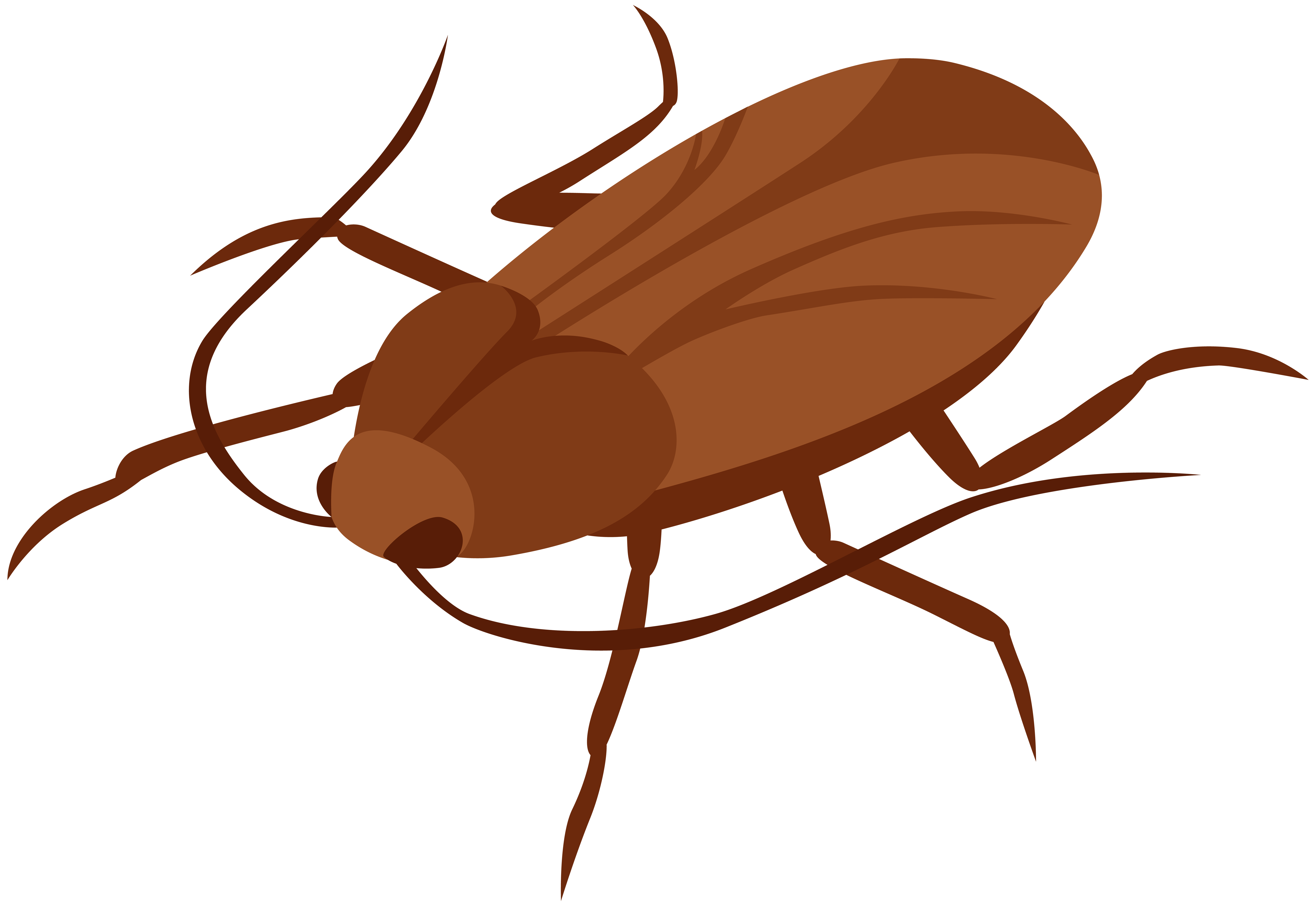 Cucaracha. Cockroach images clipart gallery