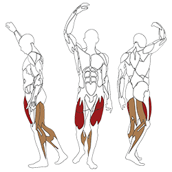 Leg extension curl l. Curls drawing professional png free library