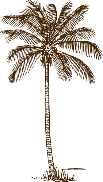 Curved palm tree png. I think it s