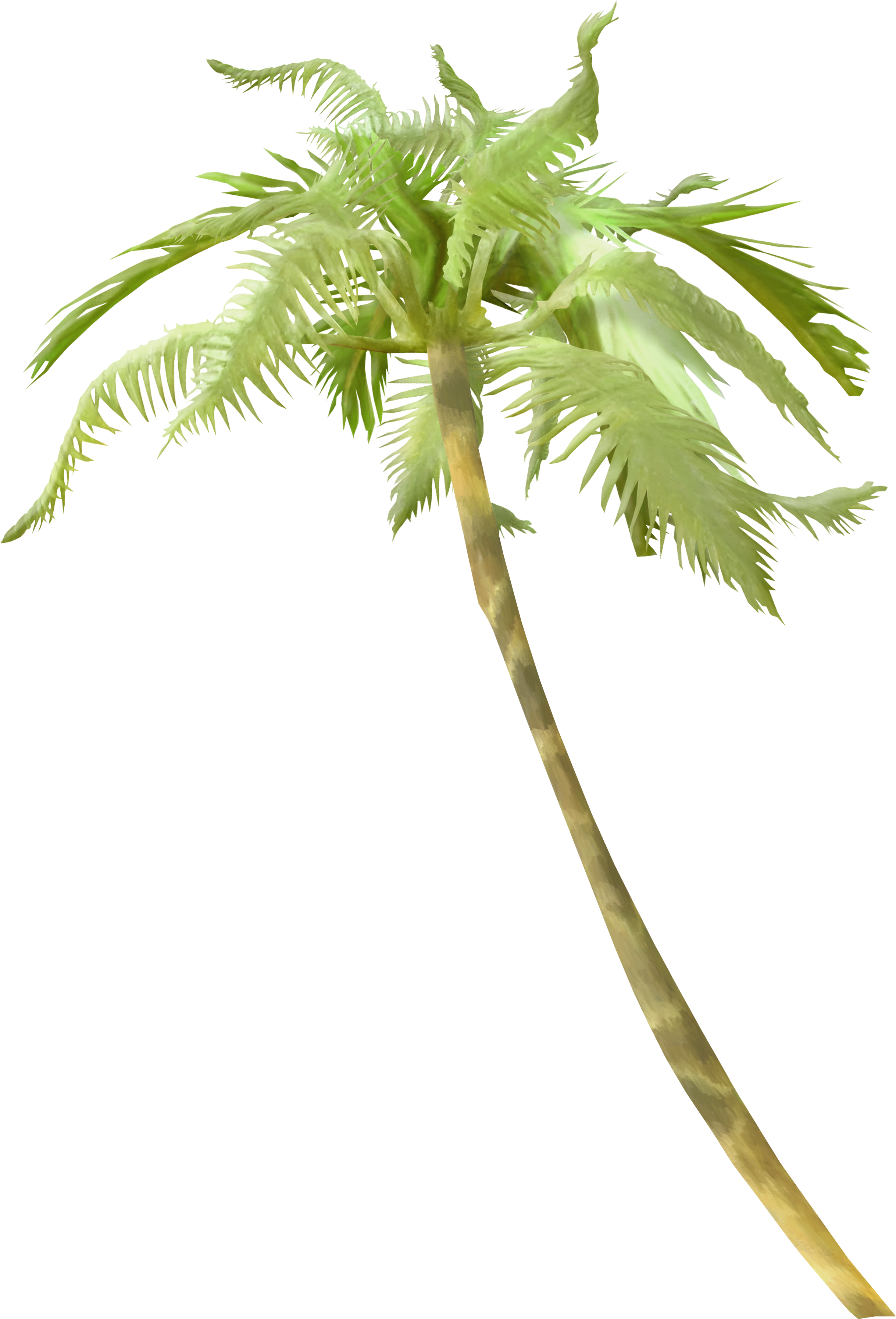 Curved palm tree png. Light arecaceae clip art