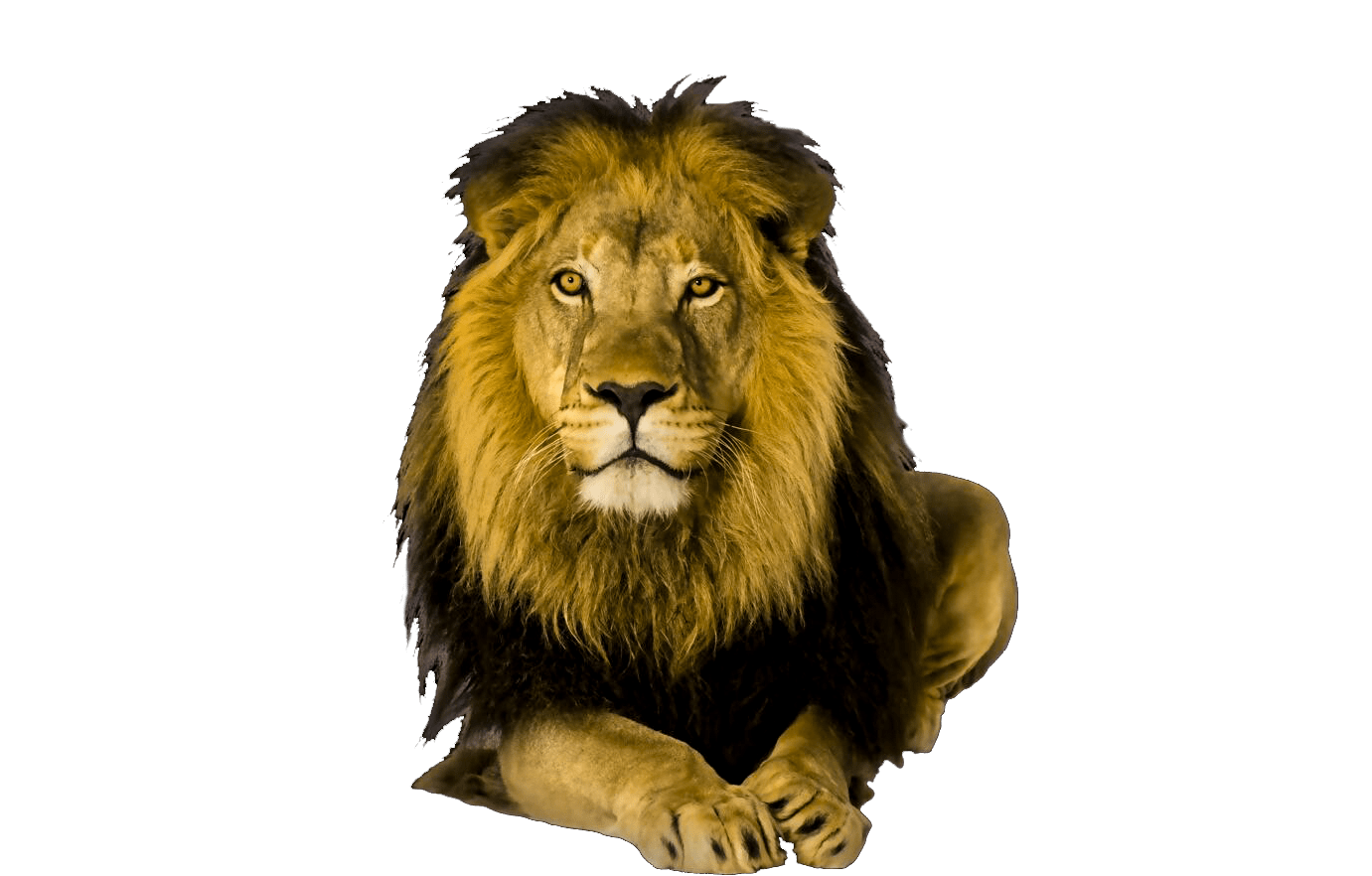 Cute animal png. Wild animals transparent images