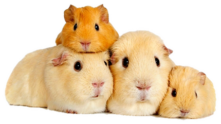 Cute animals png. Small animal uploaded by