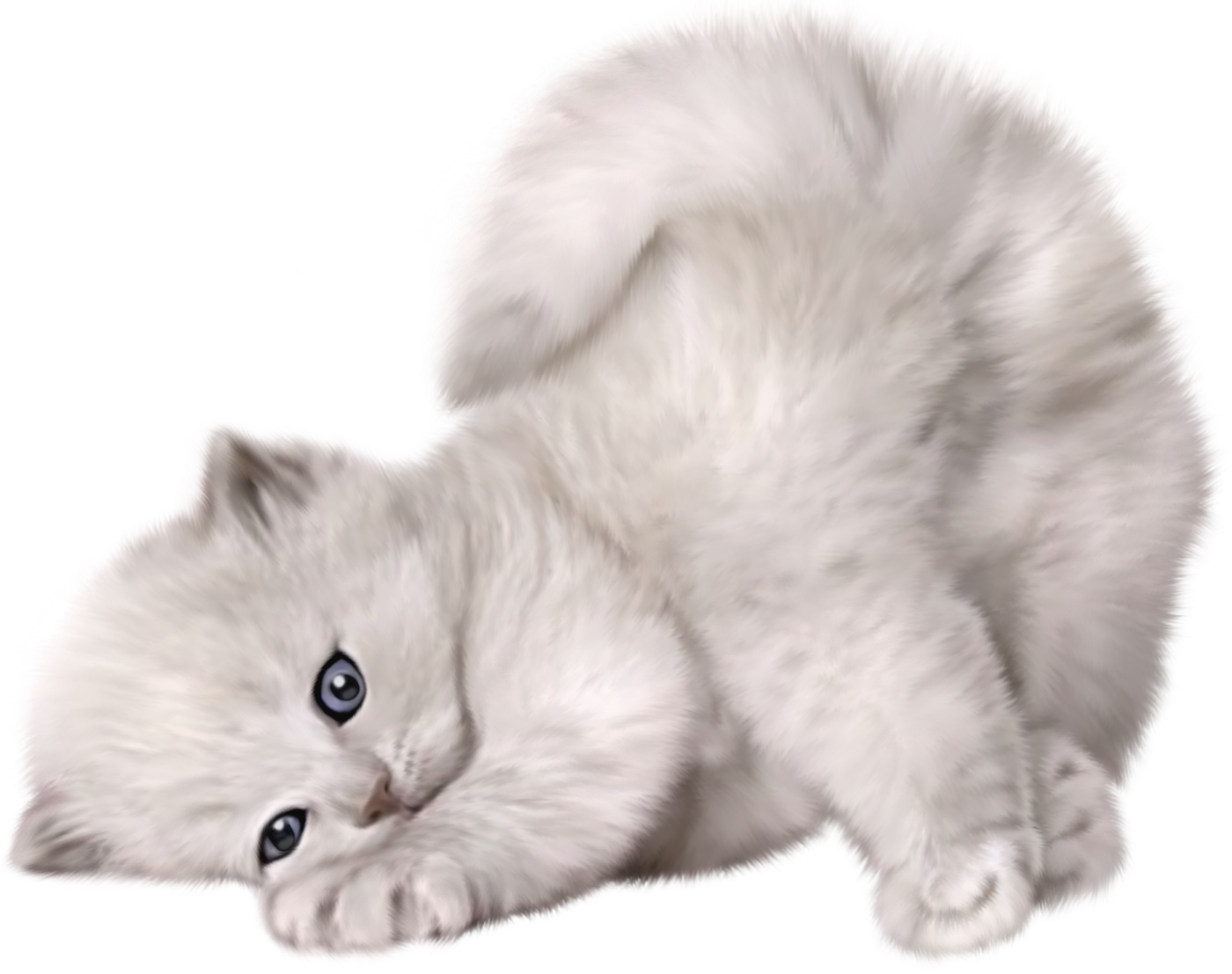 Kittens transparent fluffy. Cats png free images