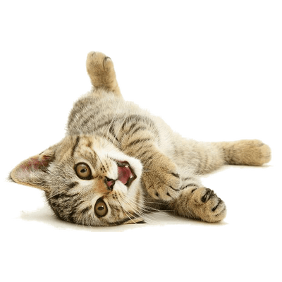 Cute cat png. Playing back transparent stickpng