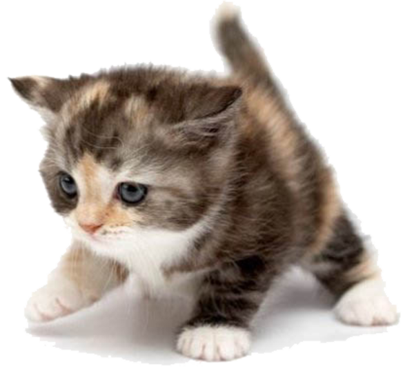 Cute cats png. Cat free images at