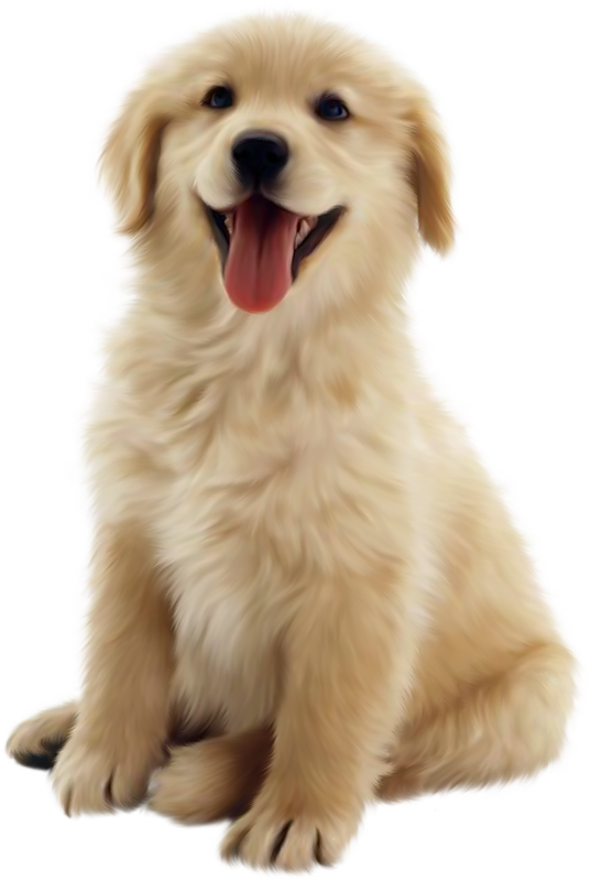 Cute dog png. Transparent pictures free icons