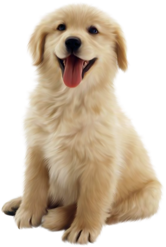 Dog transparent images pluspng. Puppy png jpg royalty free download