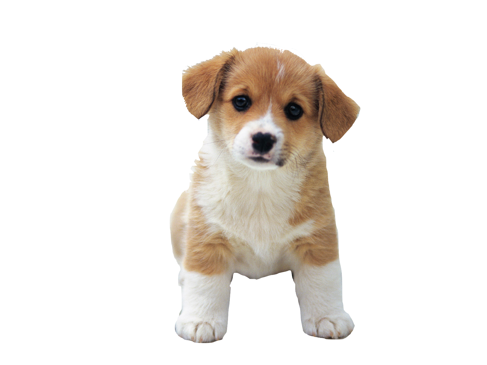 cute dog png