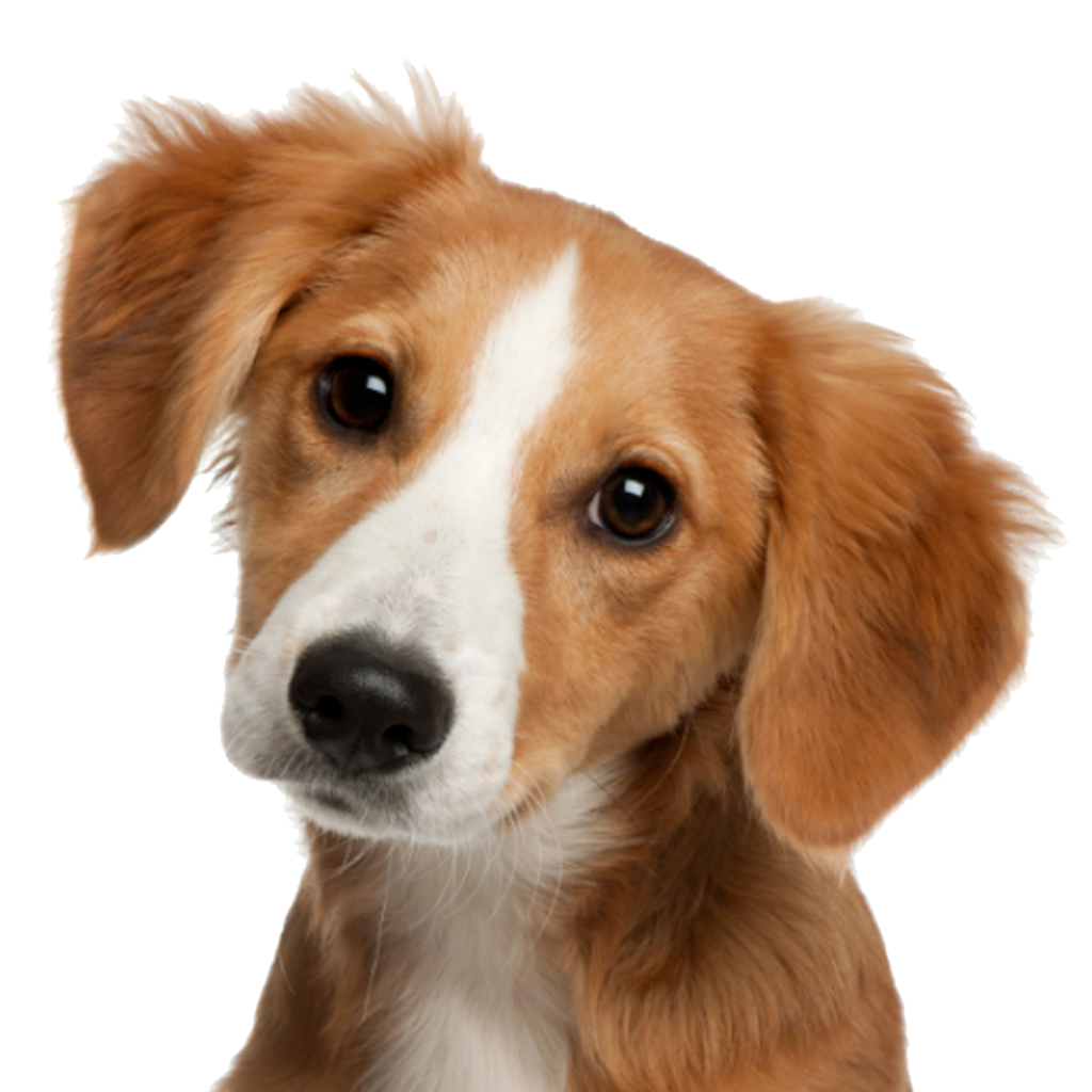 Dog face png. Cute image